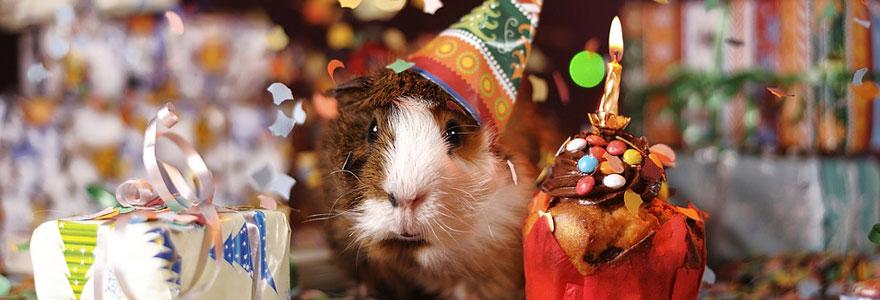 Pet Gift Baskets Business