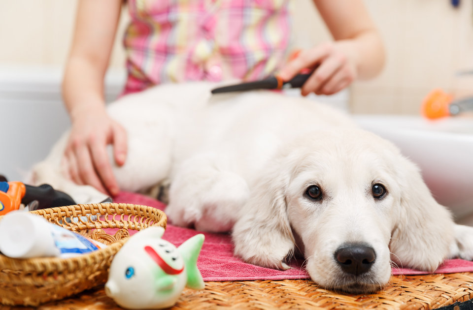Marketing Tips For the Pet Care Services Industry